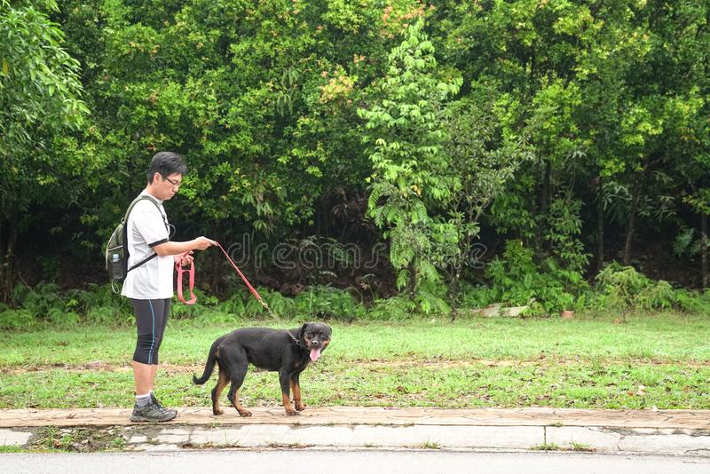 Man walking dog. Shot of a man walking his dog with nature or park background stock photo