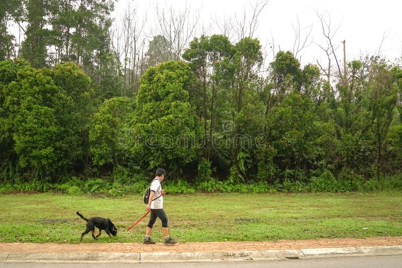 Man walking dog. Shot of a man walking his dog with nature or park background royalty free stock images