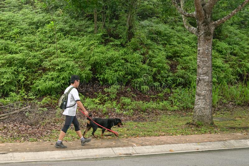 Man walking dog. Shot of a man walking his dog with nature or park background stock image