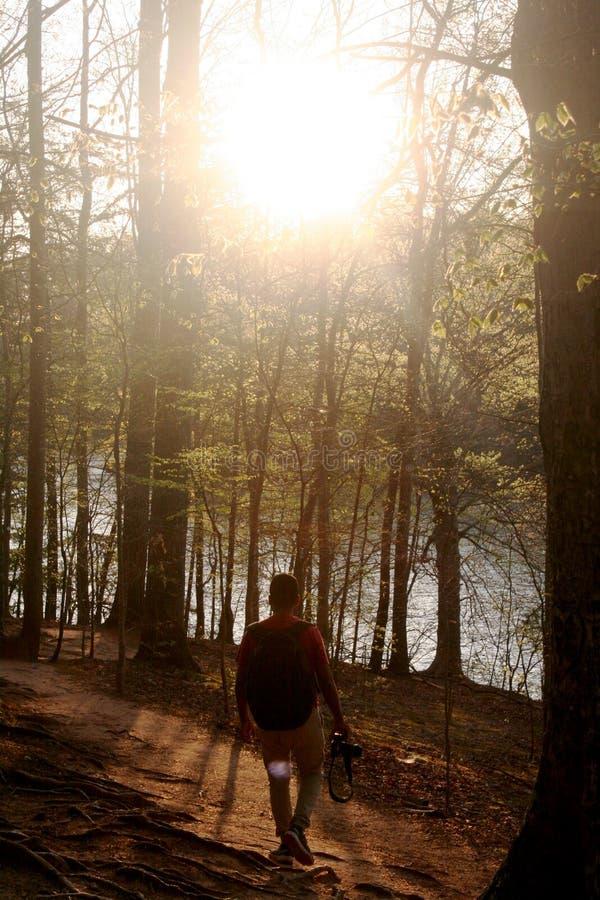 Man Walking Through the Forest stock photos