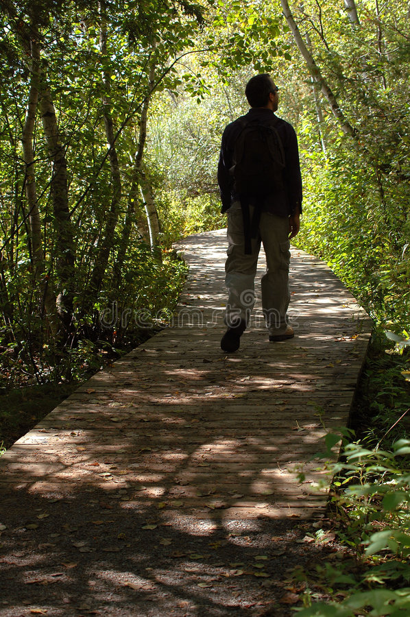 Man walking in forest stock photo