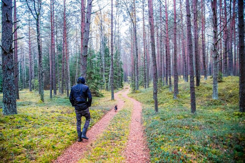 Man walking in forest and dog stock photo