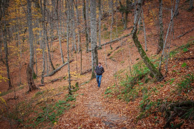 Man walking in the forest. Sport clothes weared man walking alone in the path in forest at autumn nature, long trees and fallen leaves on the ground stock image
