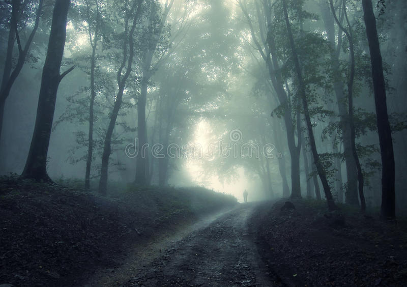 Download Man Walking In A Green Forest With Fog Stock Image - Image: 18036681