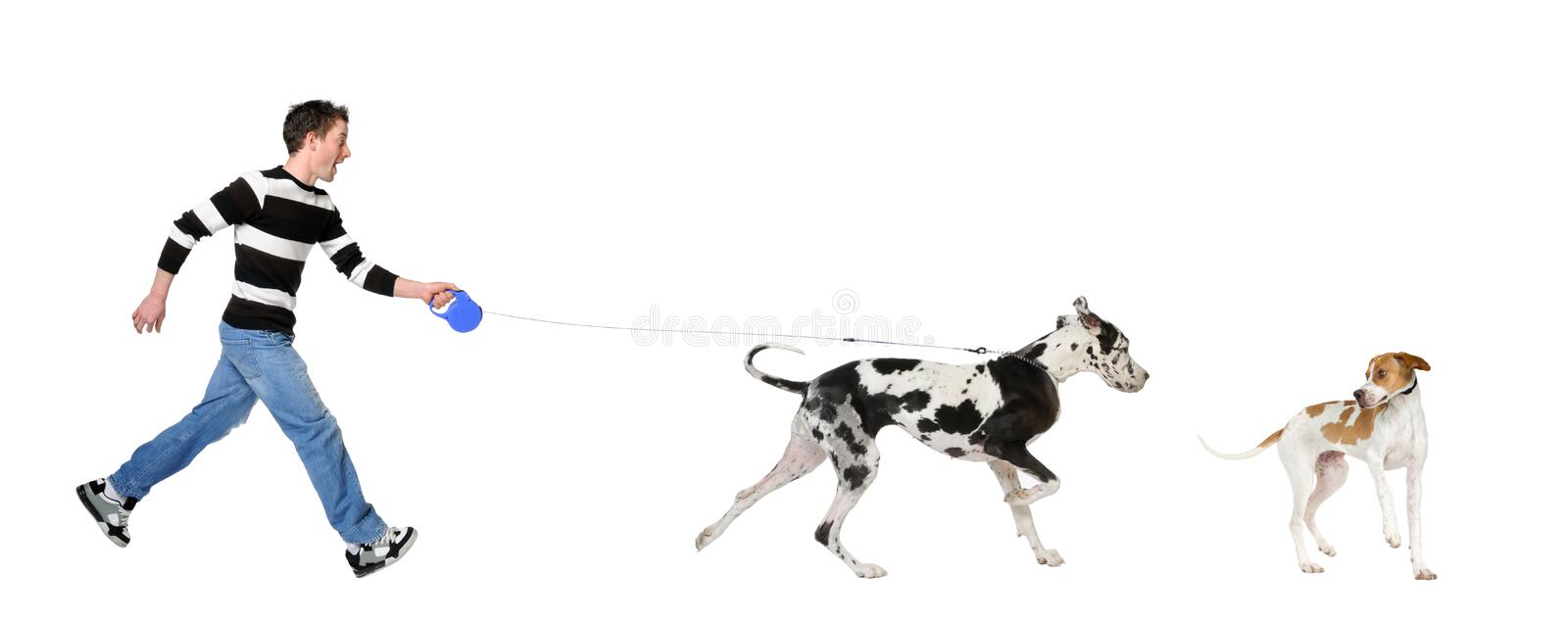 Man walking his dog (Great dane 4 years). In front of a white background stock image
