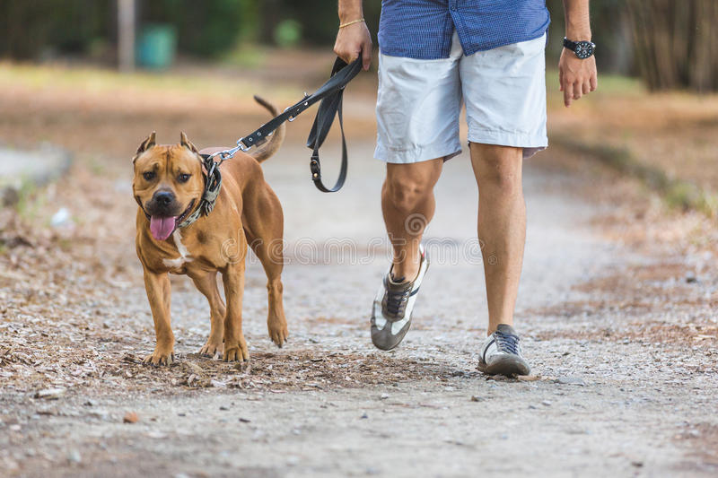 Man walking with his dog at park. Close up view on dog and on the legs of the man holding it on leash stock photography