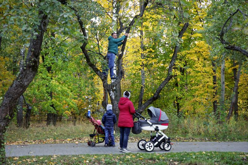 Man walking with his family in the Park climbed an Apple tree . royalty free stock photo
