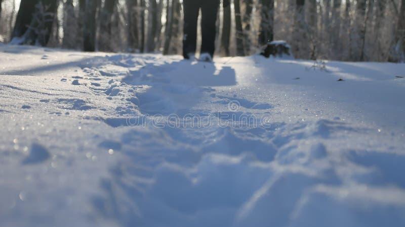 Man walking in snow winter forest beautiful nature landscape. Man walking snow winter forest beautiful nature landscape stock photo