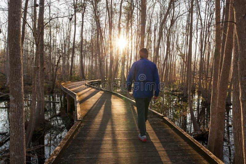 Man walking trail in early morning. Man walking forest trail in early morning royalty free stock photography