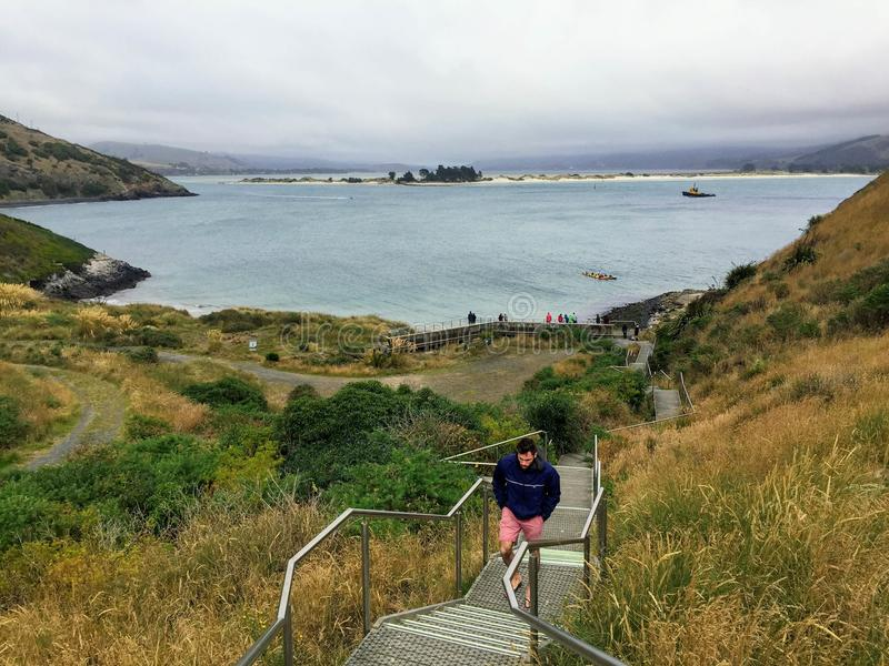 Man walking up the stairs from the beaches of the Otago Peninsula, outside of Dunedin, New Zealand royalty free stock photo