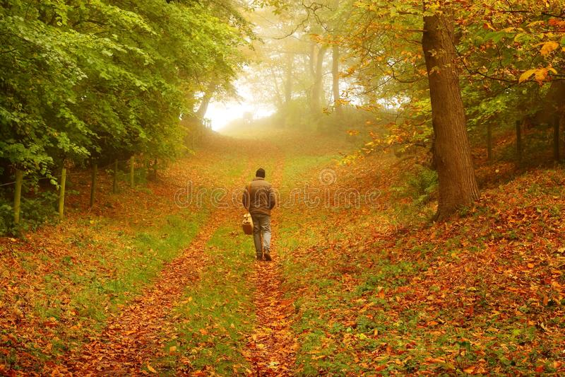 Download Man Walking Through Woodland Royalty Free Stock Images - Image: 27272669