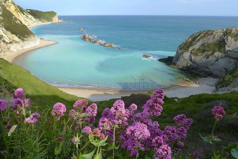 Man of War Bay near Durdle Door. Dorset, England UK The Jurassic coast a UNESCO World Heritage site royalty free stock images