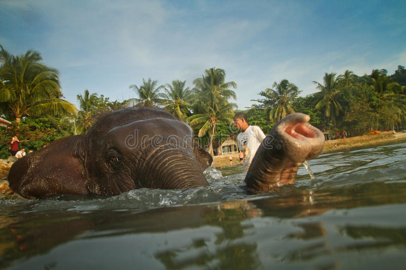 A man washes his elephant in Gulf of Siam stock image