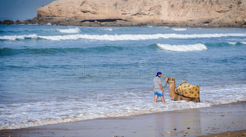 Man washing his camel near Taghazout surf village,morocco 2. A man washing his camel near Taghazout surf and fishing village,agadir,morocco stock photos