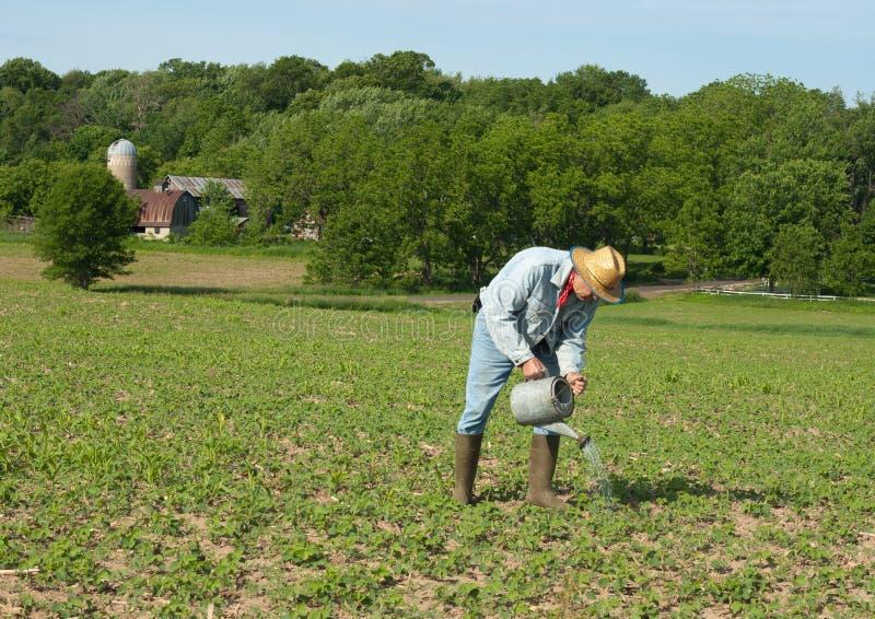 Download Man watering crops stock image. Image of sprinkle, rural - 20134033