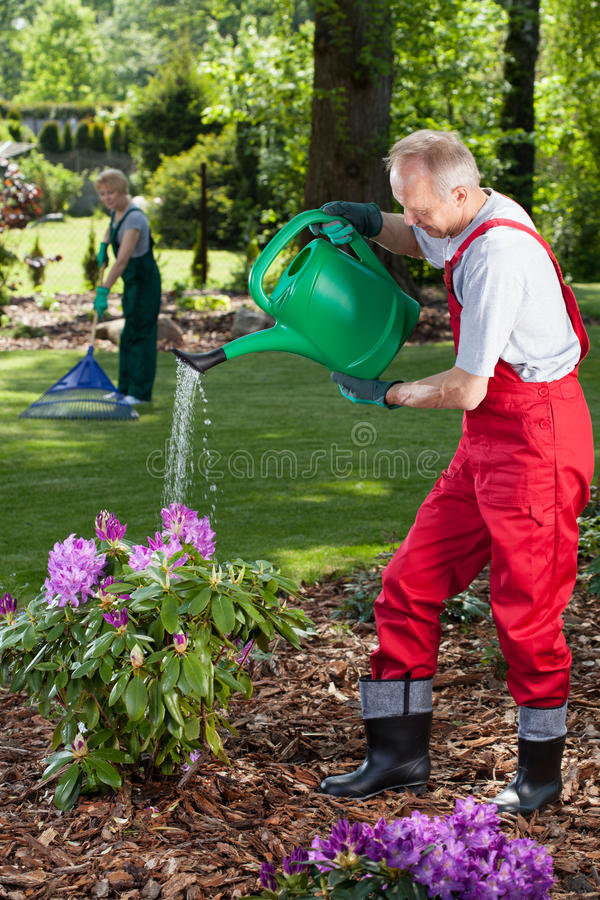Man watering the flowers when his wife cleans lawn stock image