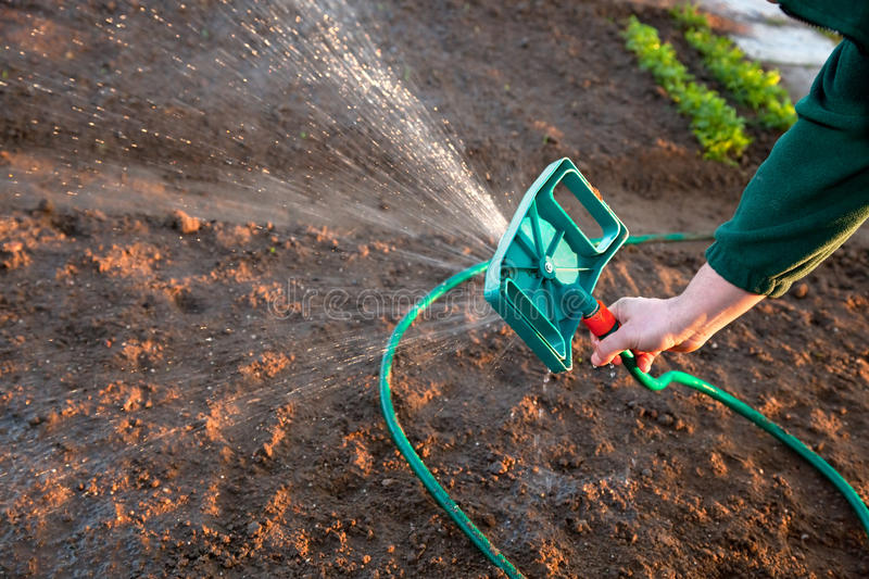 Download Man watering the ground stock photo. Image of bloom, meadow - 20226378