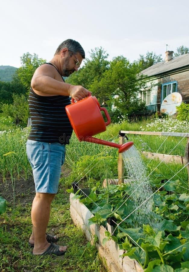 Man watering plants royalty free stock image