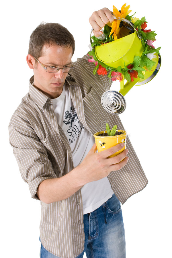 Man watering small plant. A casually dressed man watering a small potted plant with a decorated watering can royalty free stock image
