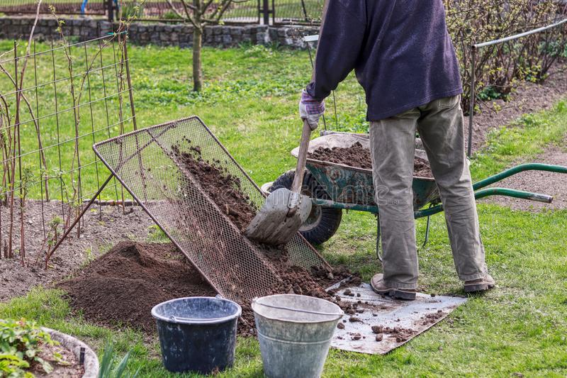 Man wears work outfit. Gardener prepare earth for new flowers and trees. He sifting soil through handmade sieve for better. Consistency earth and without stones stock photos