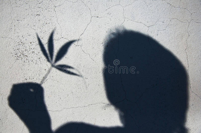 Man And Weed Leaf Stock Photo