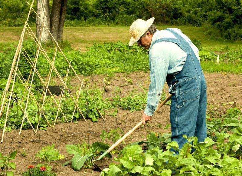 Man weeding his garden royalty free stock photography