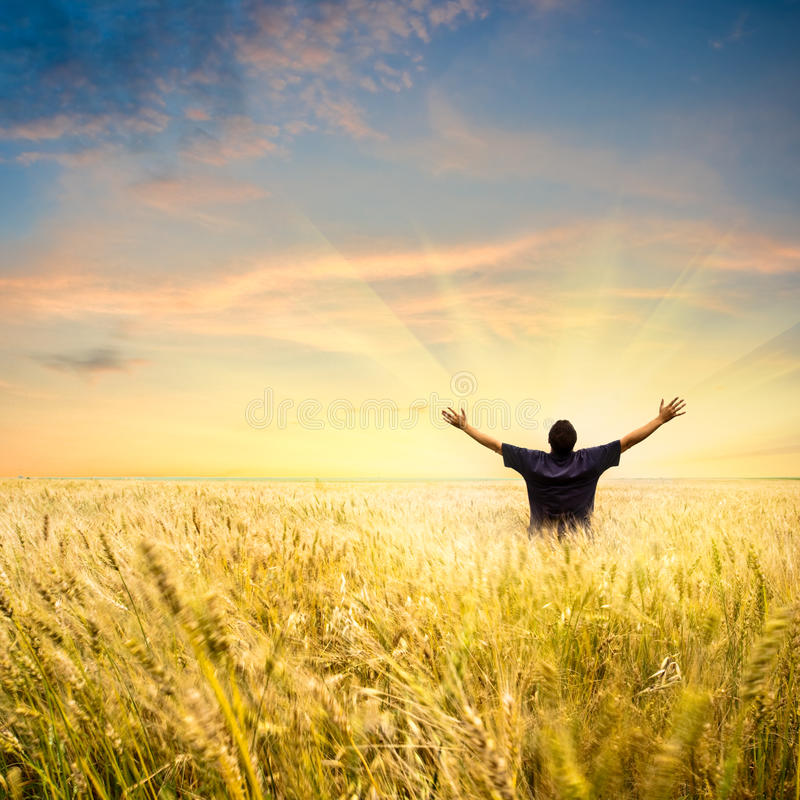 Man in wheat field stock photos