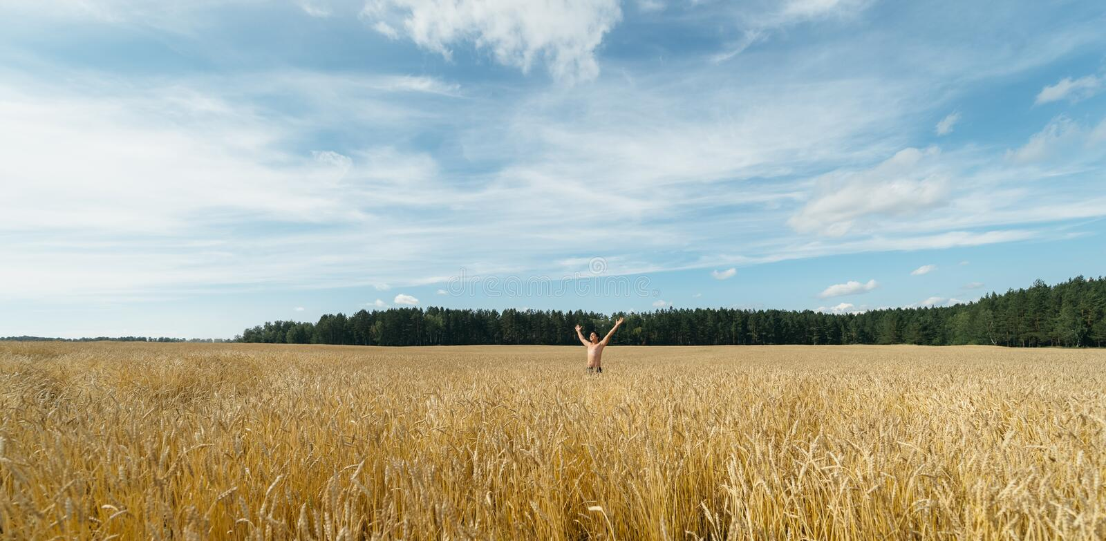 Man in a wheat field royalty free stock images