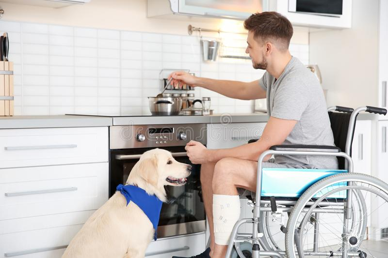 Man in wheelchair cooking with service dog royalty free stock photo