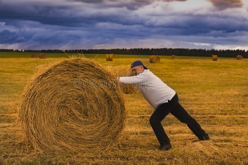 A man in a white jumper pushes a haystack in a yellow field with a blue sky royalty free stock image
