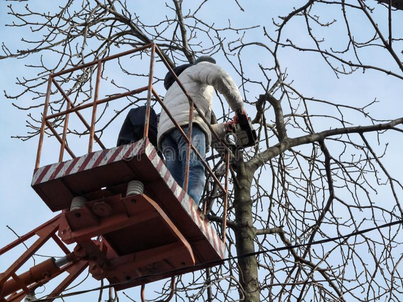 Man in winter clothes cuts off a tree branches with a chainsaw, standing on aerial work platform, view from the back. Concept of. Work on pruning tall trees royalty free stock photography