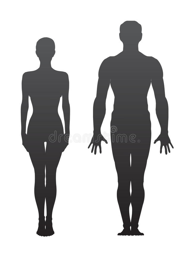 Download Man and woman stock vector. Image of biological, anatomy - 13145198
