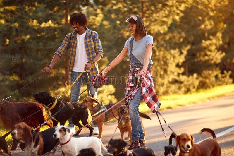 Man and woman dog walkers with dog enjoying in park. Man and women dog walkers with group dog enjoying in park royalty free stock photos