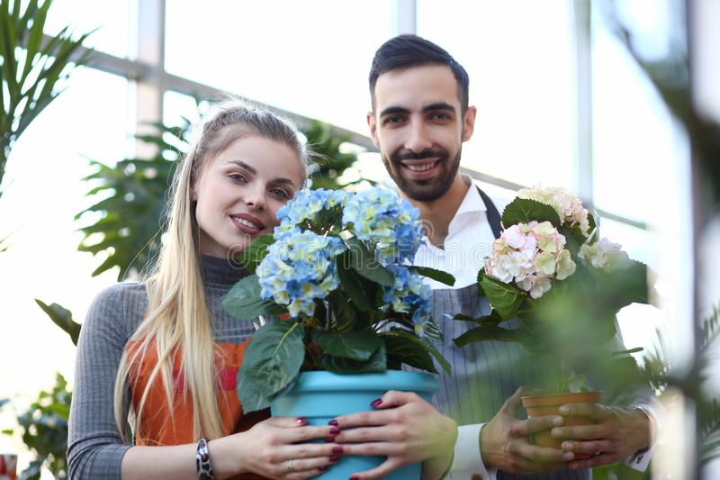 Man and Woman Florist Holding Hortensia Flower stock photography