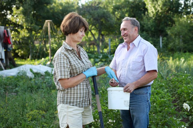 Man and woman gardeners with shovel and bucket while gardening stock photography