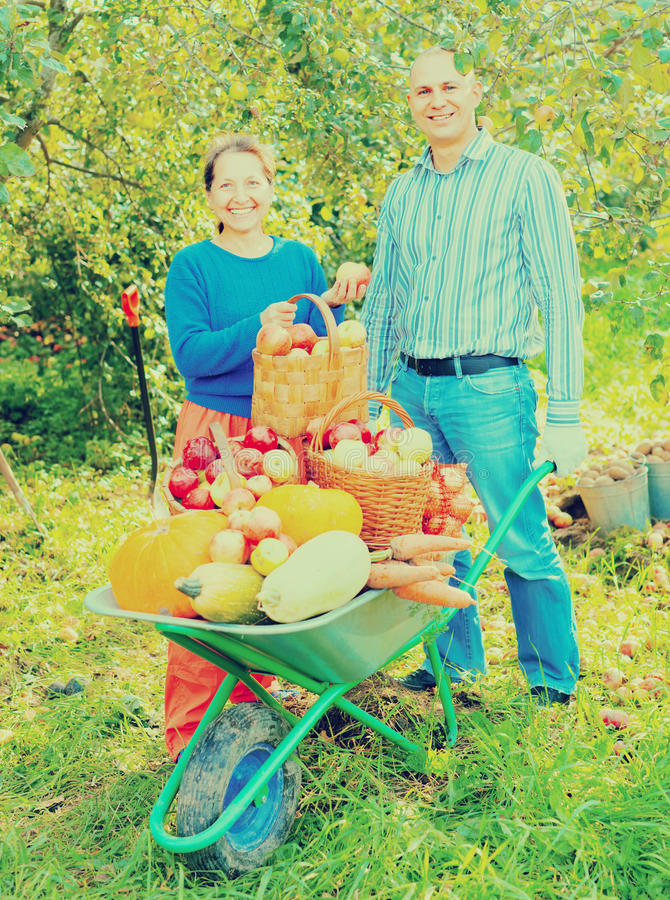 Man and woman with harvest in vegetables garden stock photo