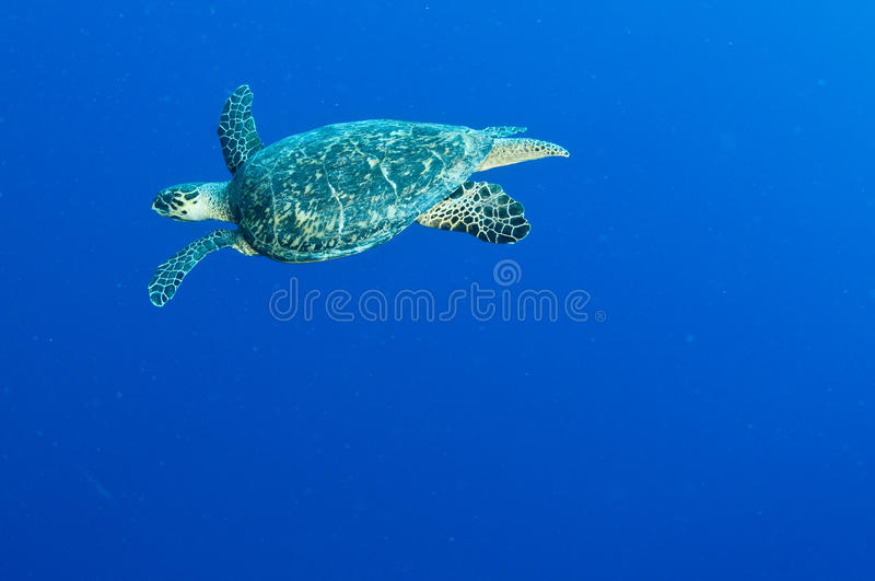 Download Man And Woman Scuba Dive Togeather Stock Photo - Image: 24555984