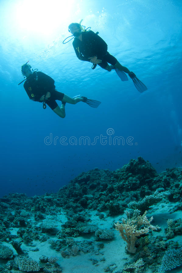 Download Man And Woman Scuba Dive Togeather Stock Photography - Image: 24557152