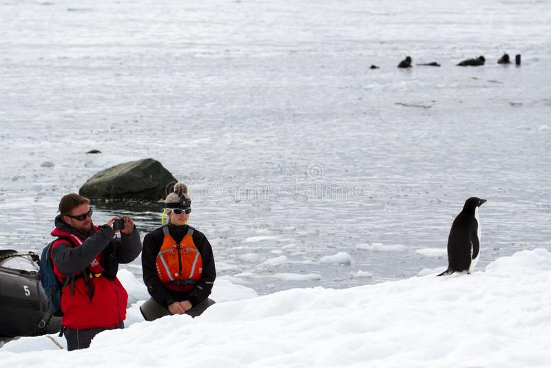 A man and a woman watching and taking a photograph of an Adelie Penguin Pygoscelis adeliae while a group of people. Mikkelsen Harbour, Antarctica - December 21 royalty free stock images