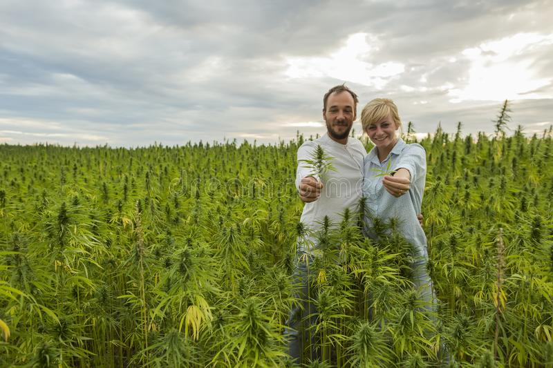 Man and woman standing in marijuana CBD hemp plants field and holding leaf and bud. Man and women standing in marijuana CBD hemp plants field and holding leaf royalty free stock images