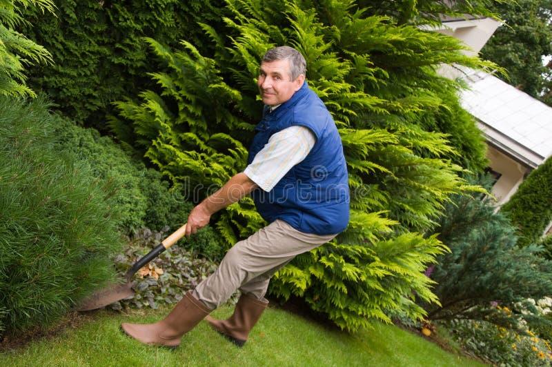 Man working in the garden. Senior Man working in the garden stock photo