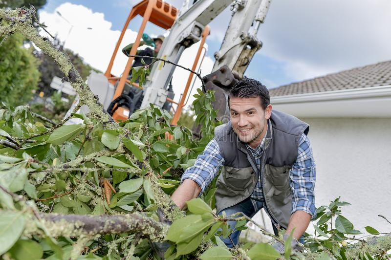 Man working with hedge cuttings royalty free stock photos