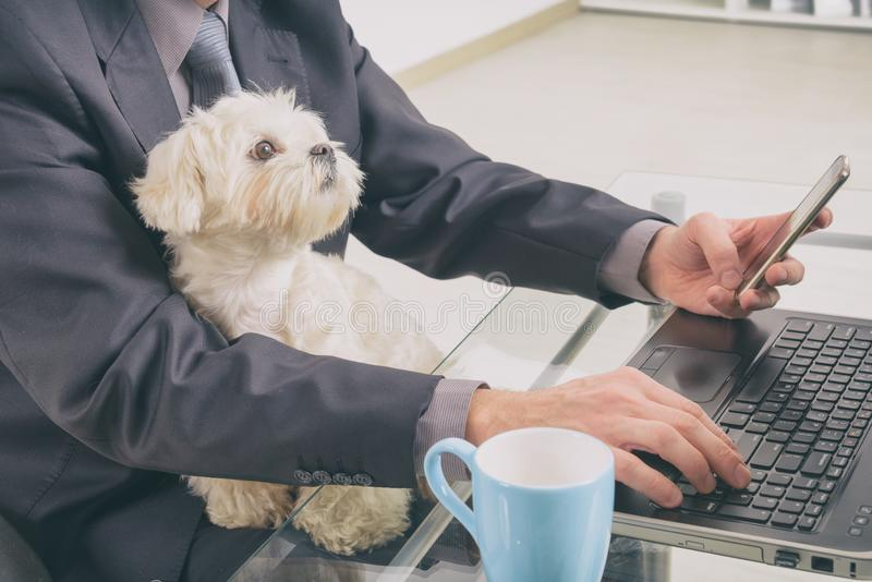 Working with dog at home. Man working at home and holding his liitle dog stock images