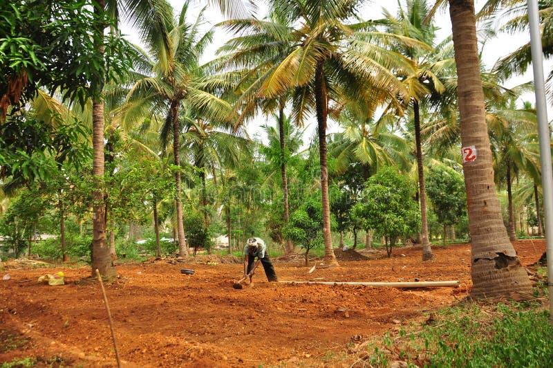 Man working on organic tropical farm royalty free stock photos