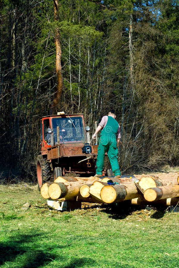 Man working with timber. Man standing near tractor working with timber logs in field stock image