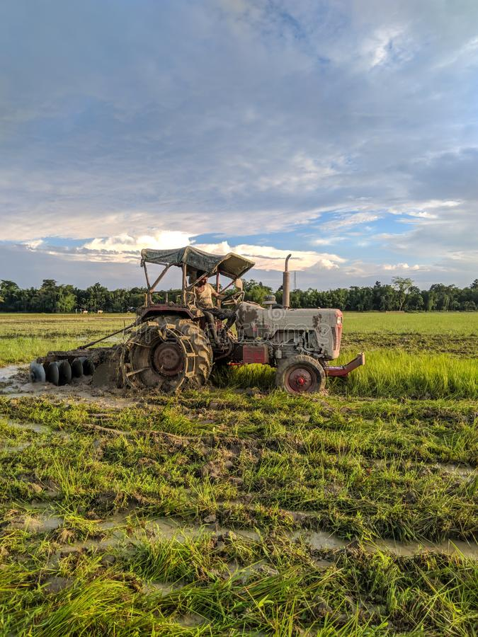 Man working with tractor on a rice field of tinsukia , Assam,India  to harvest rice crops in the aummer on June 21 of 2019. North, east, indian, religion royalty free stock photos