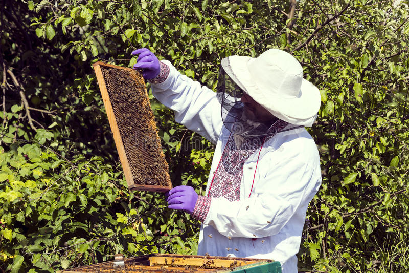 A man works in an apiary. Collecting bee honey royalty free stock photography