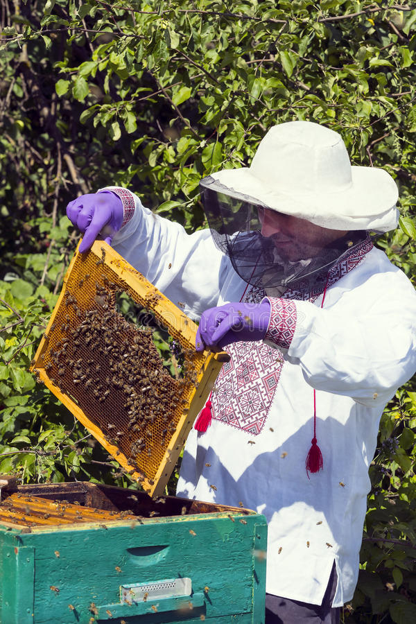 A man works in an apiary. Collecting bee honey royalty free stock image