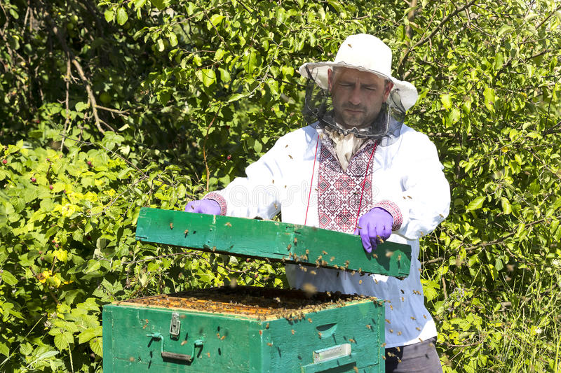 A man works in an apiary. Collecting bee honey stock photos