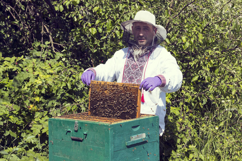 A man works in an apiary. Collecting bee honey stock photography